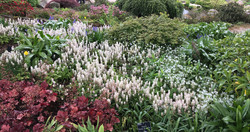 garden-planting-consultant-Wales