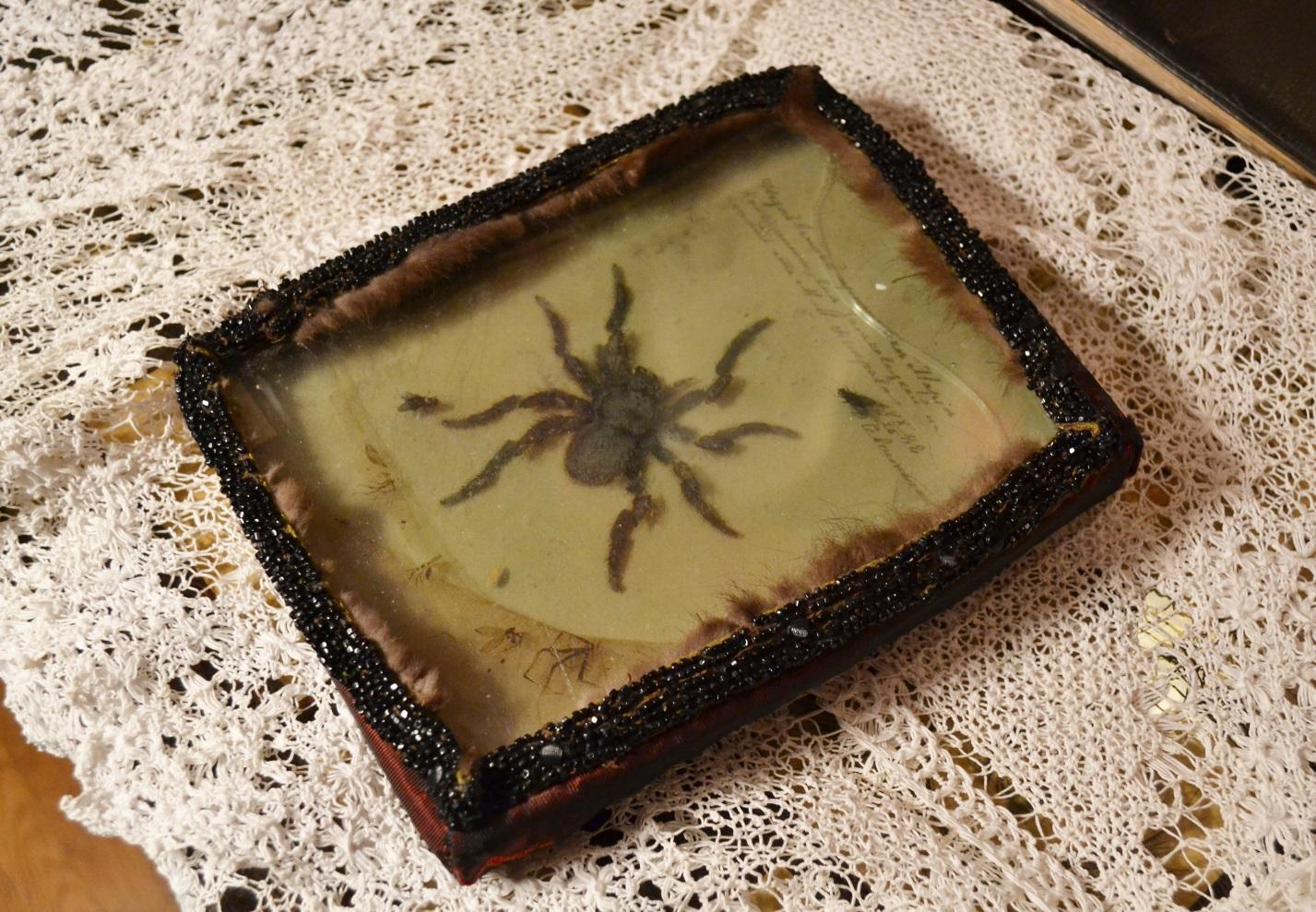 «Павук і мухи» сувенір від севастопольців, 1888 рік.