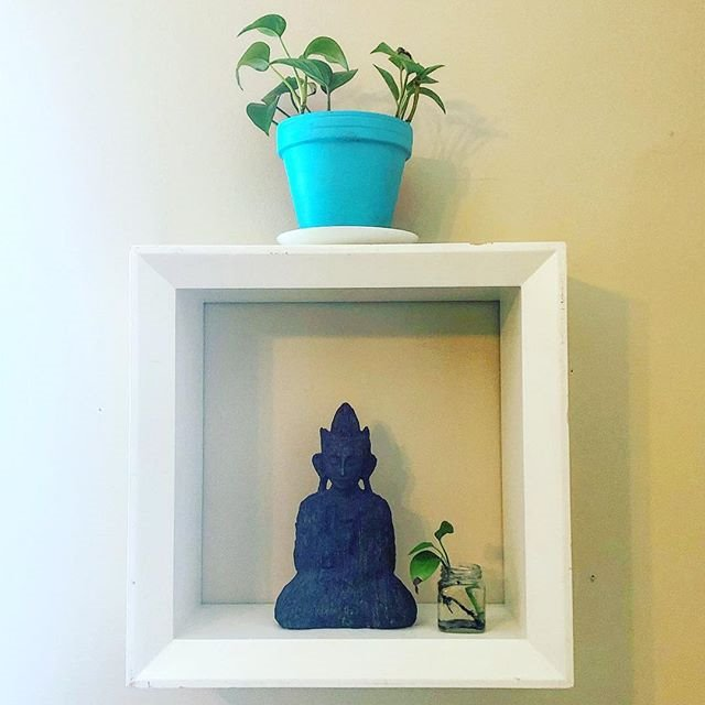 "New_home_for_my_""pothos_and_azure""_with_"