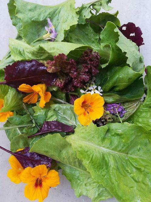 Jolly Salad 180g