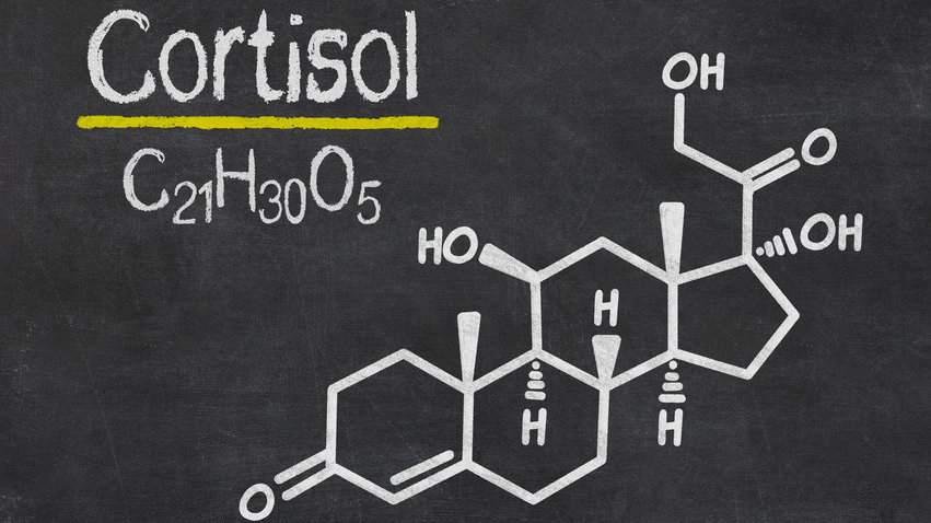 Cortisol-Tagesprofil