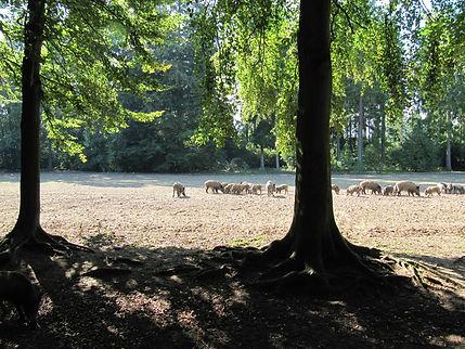 September 09 von der Kamera 088.jpg