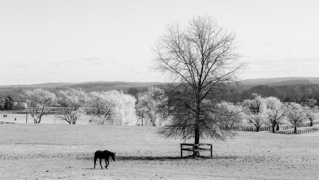 HorseUpstate.jpg