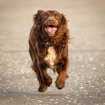 PDI: 'The Joy of Running' by Terry Hanna - Ballynahinch Camera Club