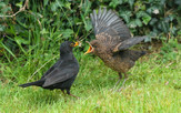 'Feeding Time' by John Knipe ( 10 marks )