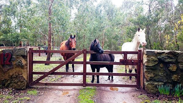 horses at gate 2B.jpg