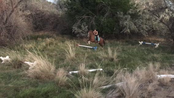 Forest jump skipper.PNG