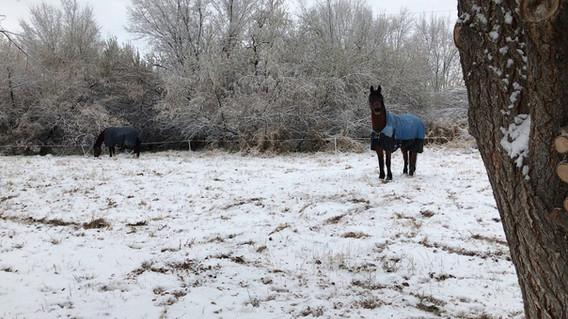 Winter west park ricoh and Bravo.jpg