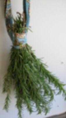 herbal medicine Boone
