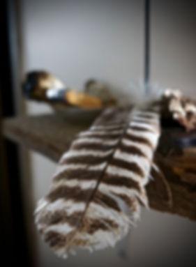 feather, Reiki Knoxvile