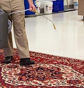 rug spraying.jpg
