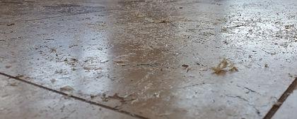 Travertine Floor Sealer Pealing.jpg