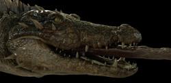 crocodile_lookdev_cave_v01_camA1.0001