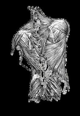 Muskler som kan skapa ryggont, ont i nacken