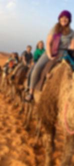 camels-sahara.jpg