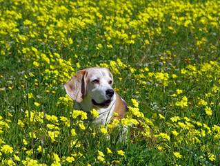 Spring is Here. Bring on the Allergies!