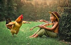 Dancing Hen