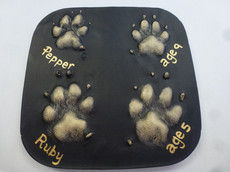 paw print plaster outprints