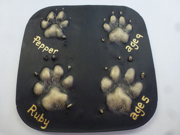 Dog paw print plaster 2D outprints