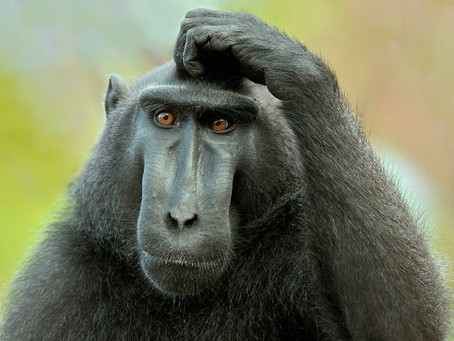Crafty Monkey's FAQs!