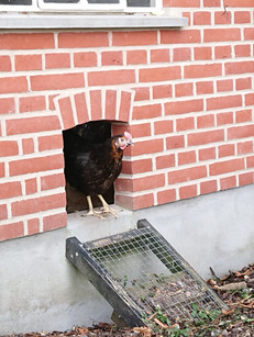 """Få muret nyt hønsehus i samme stil som jeres eksisterende hus. Hvorfor ikke gå """"all in"""" på herlighederne i haven. Måske et lækkert orangeri med muret sokkel kunne friste. Det er smukt når hovedhus og mindre bygninger spiller sammen i detaljen."""