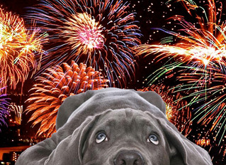 Fourth of July & Fireworks: 5 Calming Strategies to Keep Your Dog Safe