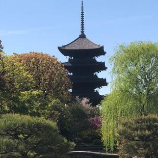 新緑映える東寺