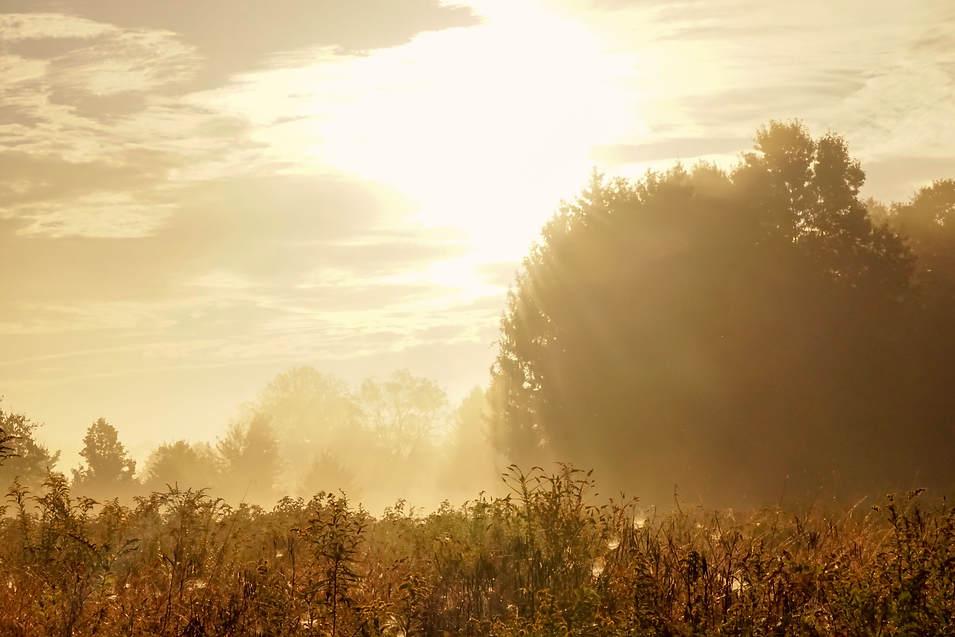 foggy meadow.jpg
