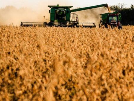 Exportação de soja deve atingir 6,722 milhões de t em agosto, diz Anec