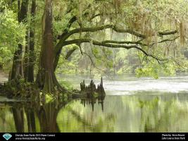 Lake-Louisa_contest_steve-bower_Live-Oak-by-the-Trail