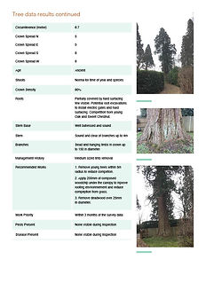 CC_Tree Report_D4.0_No Details2.jpg