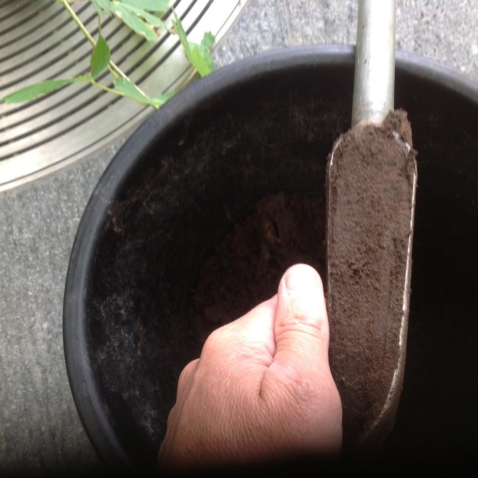 Soil sample.JPG