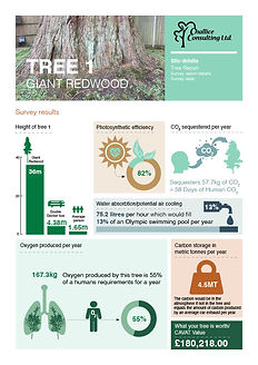 CC_Tree Report_D4.0_No Details.jpg