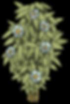 DGDD_AFL__na-68.png