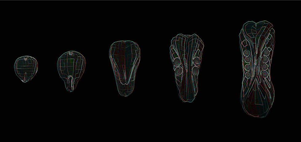 Embryo_Development_6.png