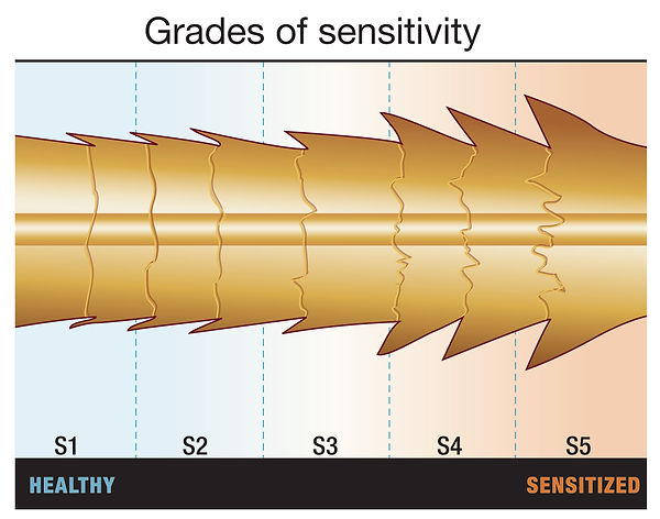 grades of sensitivity.jpg