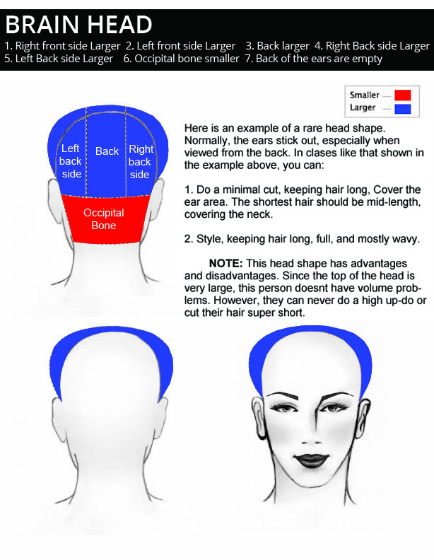 BRAIN-HEAD-shape-description.jpg
