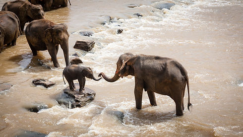elephants-1900332_1920.jpg