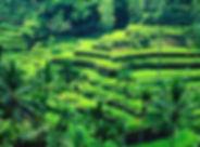 rice-terrace.jpg