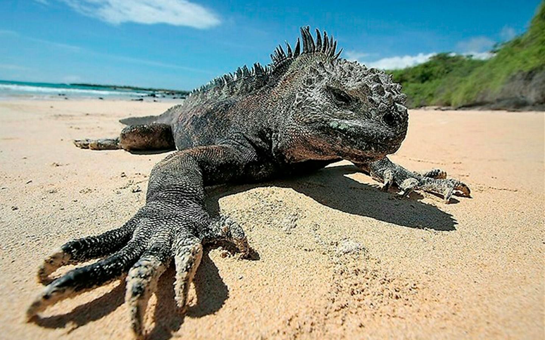 iguana-blog