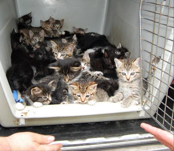 kitten rescue.jpg