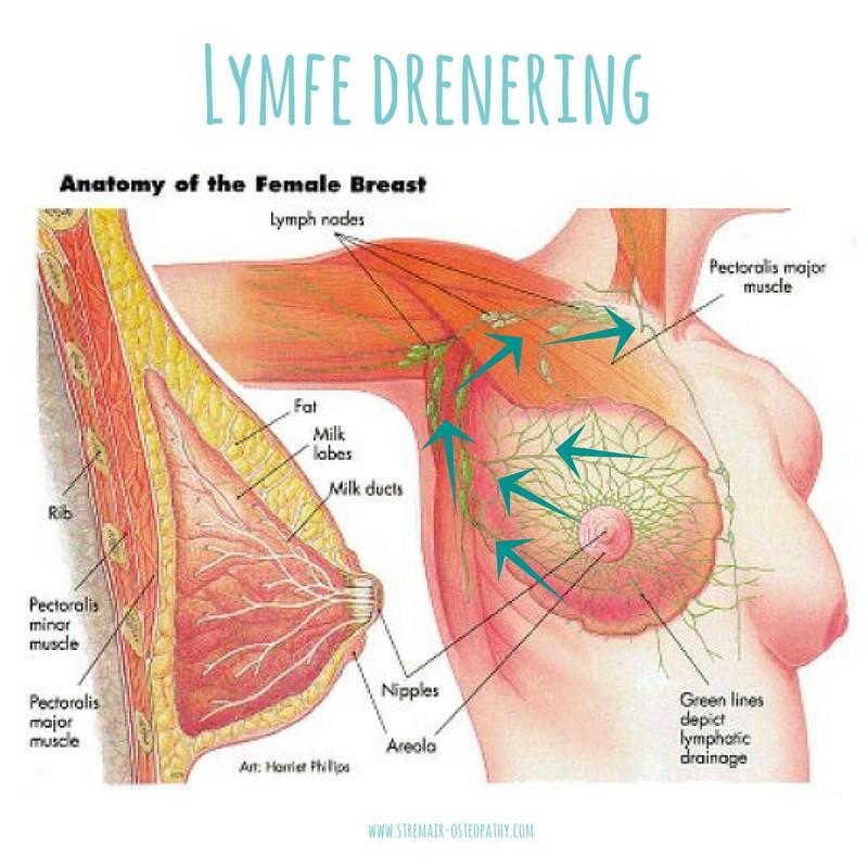 lymfedreneringen av brystet