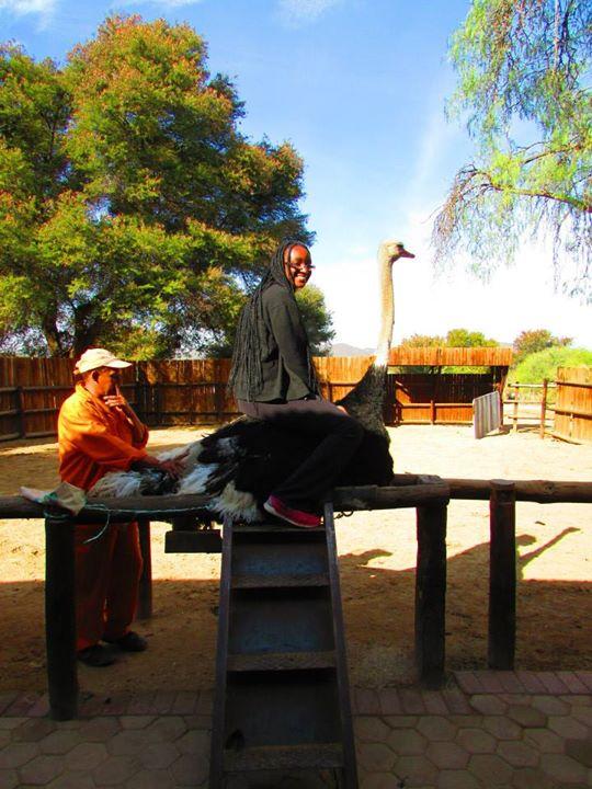 sat on an ostrich