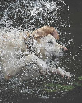 Glücklicher Hund beim Training im Wasser