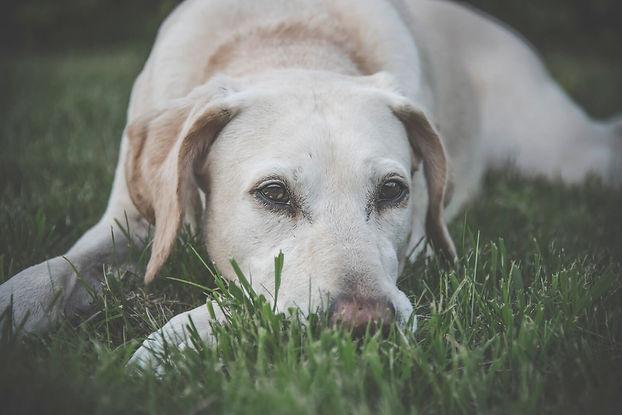 Grannen vermeiden - Hundeschule in NRW