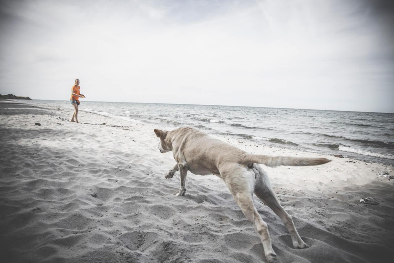 Hundetraining mit Herz und Verstand