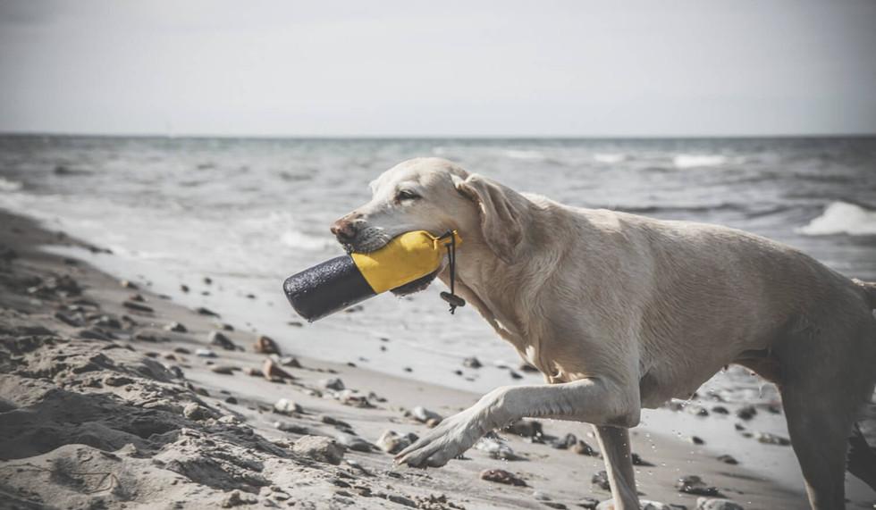 Hundetraining-43.jpg