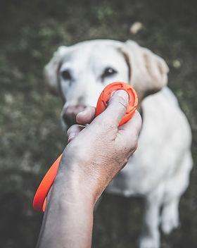 Clicker Training bei der Hundetrainerin Carola Hentschel