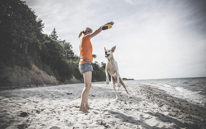 Hundetraining-41.jpg