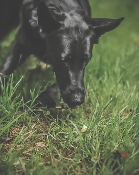 Hundetraining Anti-Giftköder